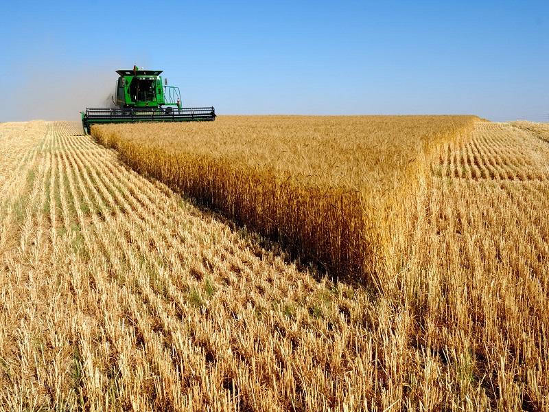 Safra 2018/2019 deve chegar a 238,9 milhões de toneladas de grãos