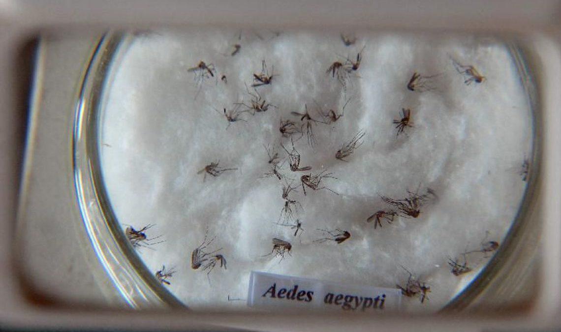 Dengue ameaça estados do Nordeste, Espírito Santo e Rio